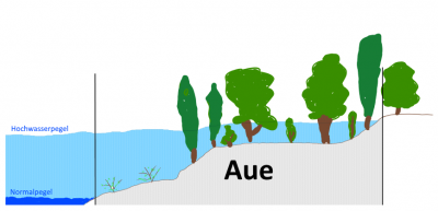 Sumpfweg Königswinter Hochwasser Hochwasserschutz Auenlandschaft Sumpfweg-Aue